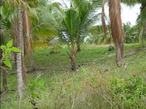【注目のリクエスト&サポート】セブ島での土地の買い手募集/ハワイでゴルフレッスン