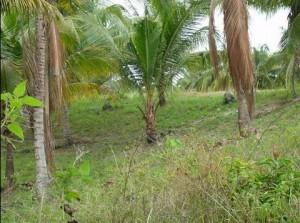 セブ島の土地
